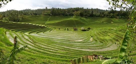 http://fc01.deviantart.net/fs70/i/2010/365/2/d/panorama_bali_rice_terraces_2_by_melmarc-d31nw18.jpg